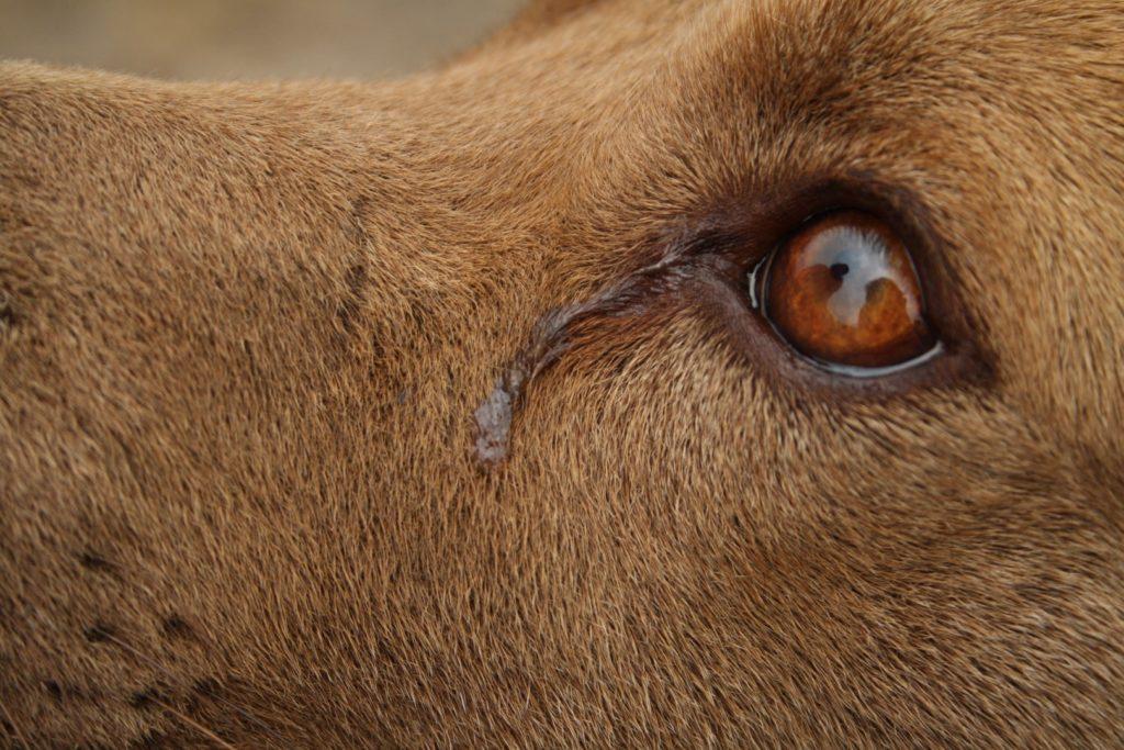 """dog animal puppy look animals pet eye sad 599990 1024x683 - il grido animalista, nuovo """"giornale"""" animalista on line, nato il 9 dicembre 2017 da un'idea di ivana, dino e tom. a breve nuovi articoli da leggere. Se vuoi collaborare contattaci."""