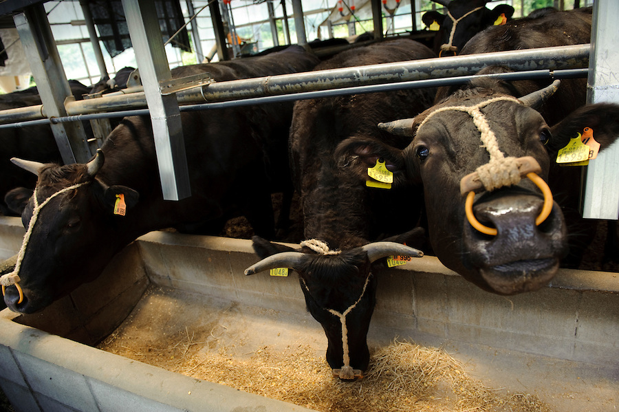 20Kobe beef - Il mercato della carne e le sue incredibili e crudeli sfaccettature