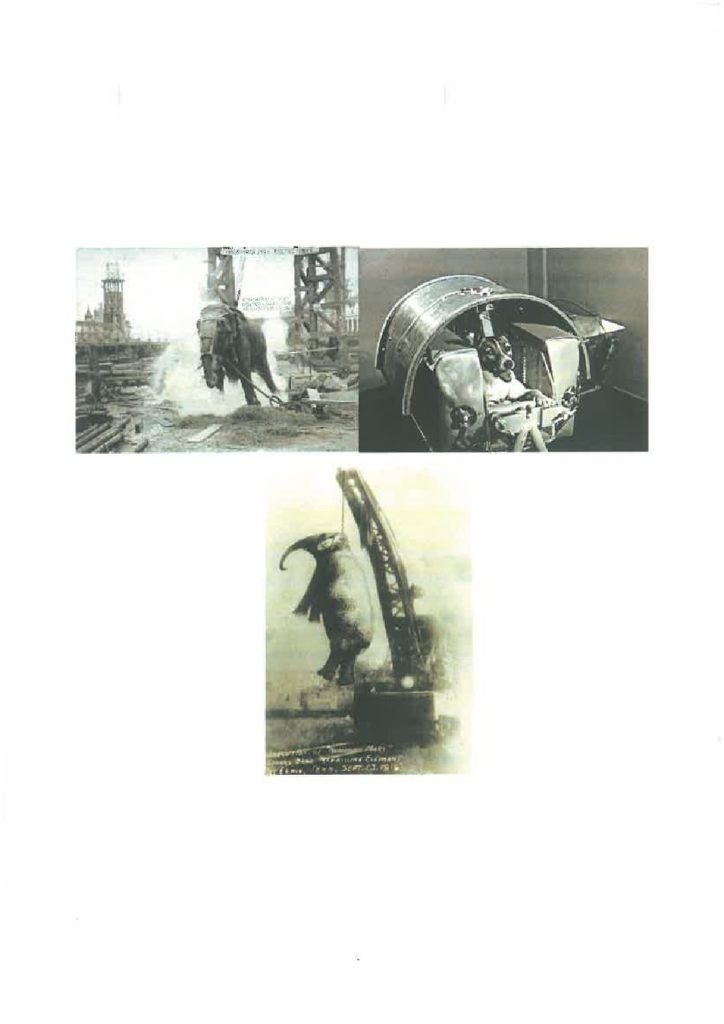 "SKMBT C45218022811140 pdf 1 724x1024 - Big Mary, Laika, Topsy e le altre vittime del sistema ""umano"" - editoriali-"