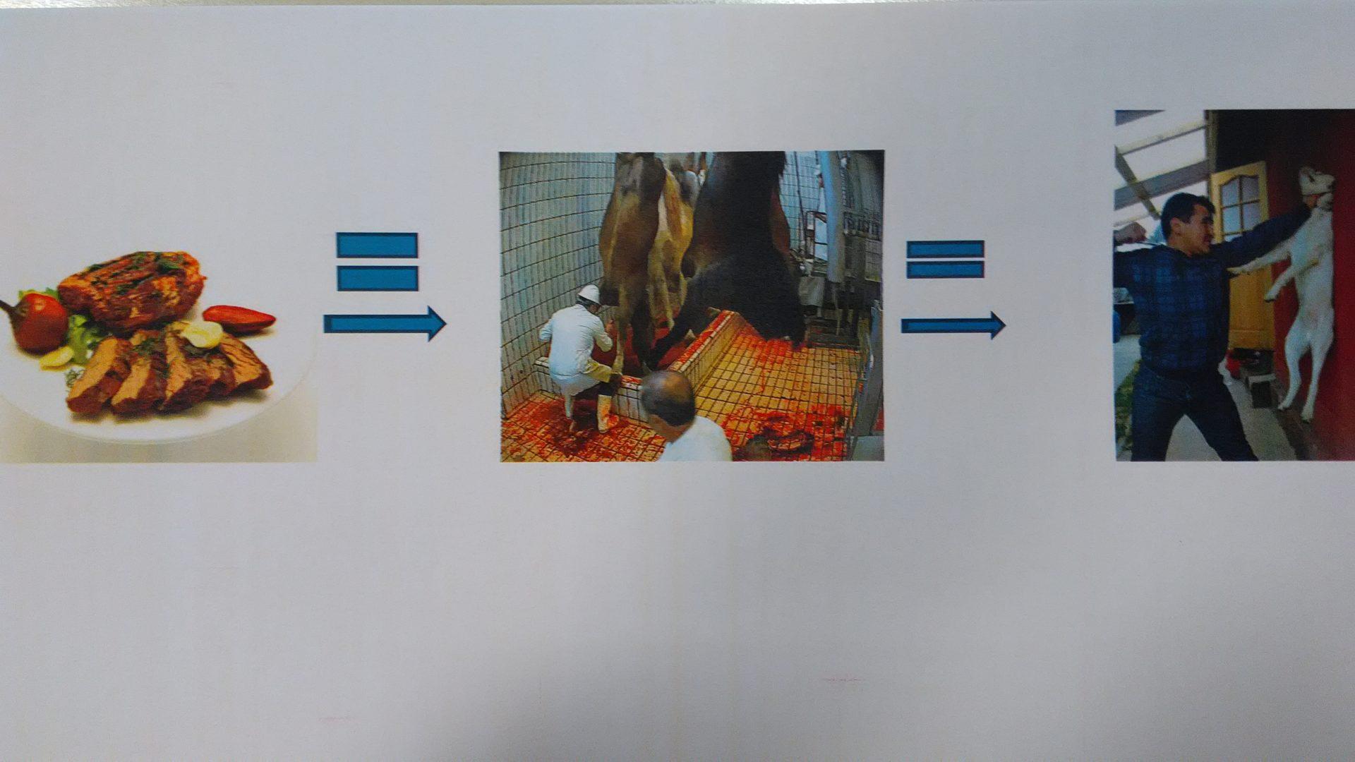 """""""L'effetto Farfalla"""" = Vegan è la sola ed unica risposta alle violenze sugli animali e alla violenza in genere"""