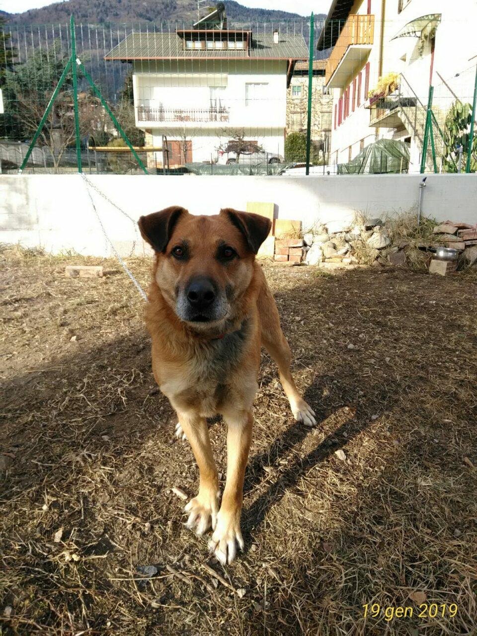 IMG 20190120 WA0015 - La storia di SOLO (un cane come tanti)