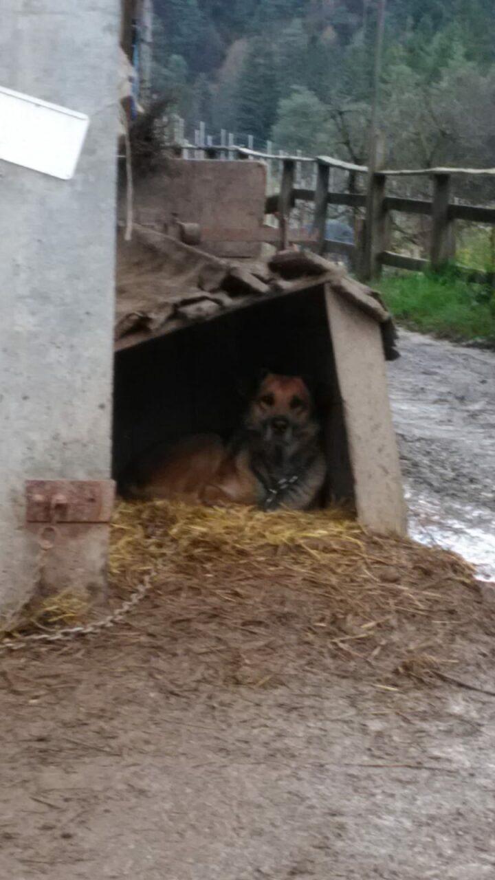 IMG 20190120 WA0021 - La storia di SOLO (un cane come tanti)