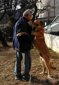 SOLO E DINO 3 - La storia di SOLO (un cane come tanti)