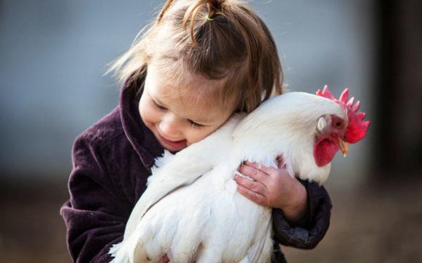 gallina come animale d affezione e compagnia 696x375 1 600x375 - CORONA VIRUS vs UOMO E GLI ALTRI ANIMALI (un mondo nuovo è ancora possibile?) - editoriali-