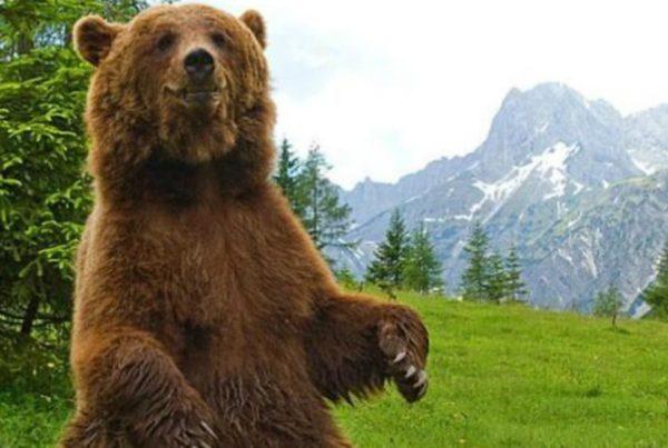 orso in piedi 600x403 - Fernanda e l'orso - editoriali-