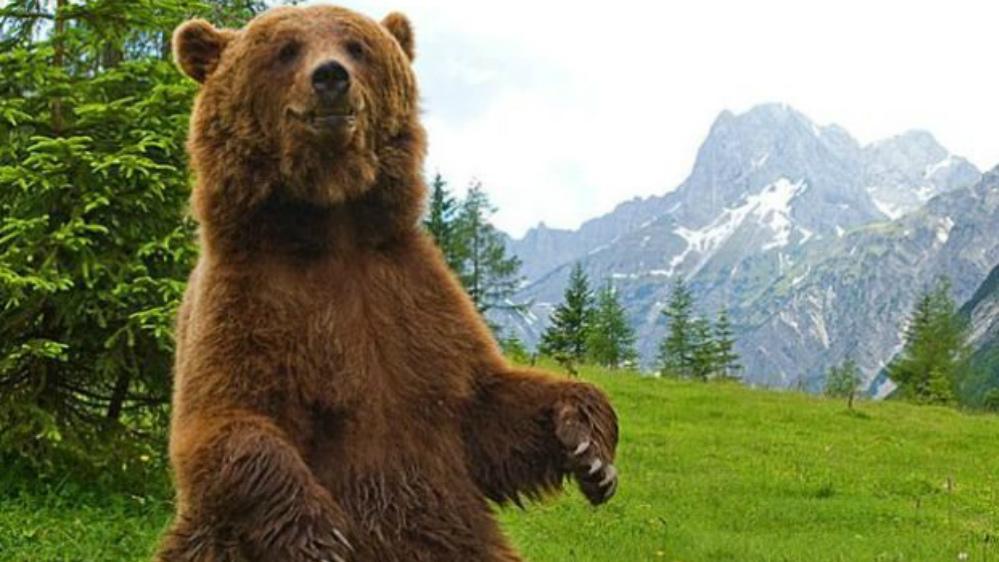 orso in piedi - Fernanda e l'orso - editoriali-
