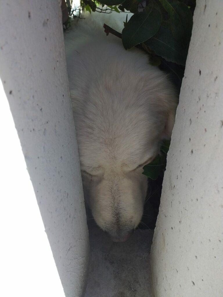 Bella 768x1024 - La sofferenza dei cani che vivono in giardino - editoriali-