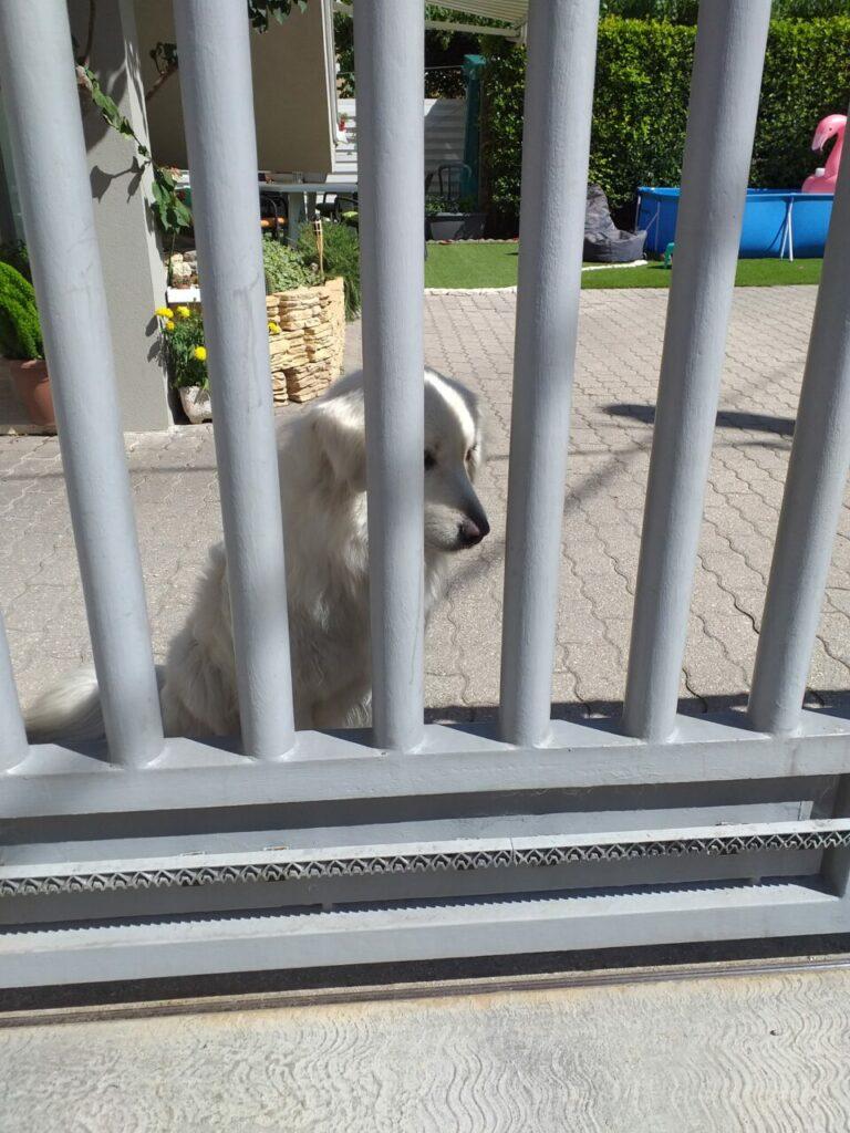 bella 1 768x1024 - La sofferenza dei cani che vivono in giardino - editoriali-