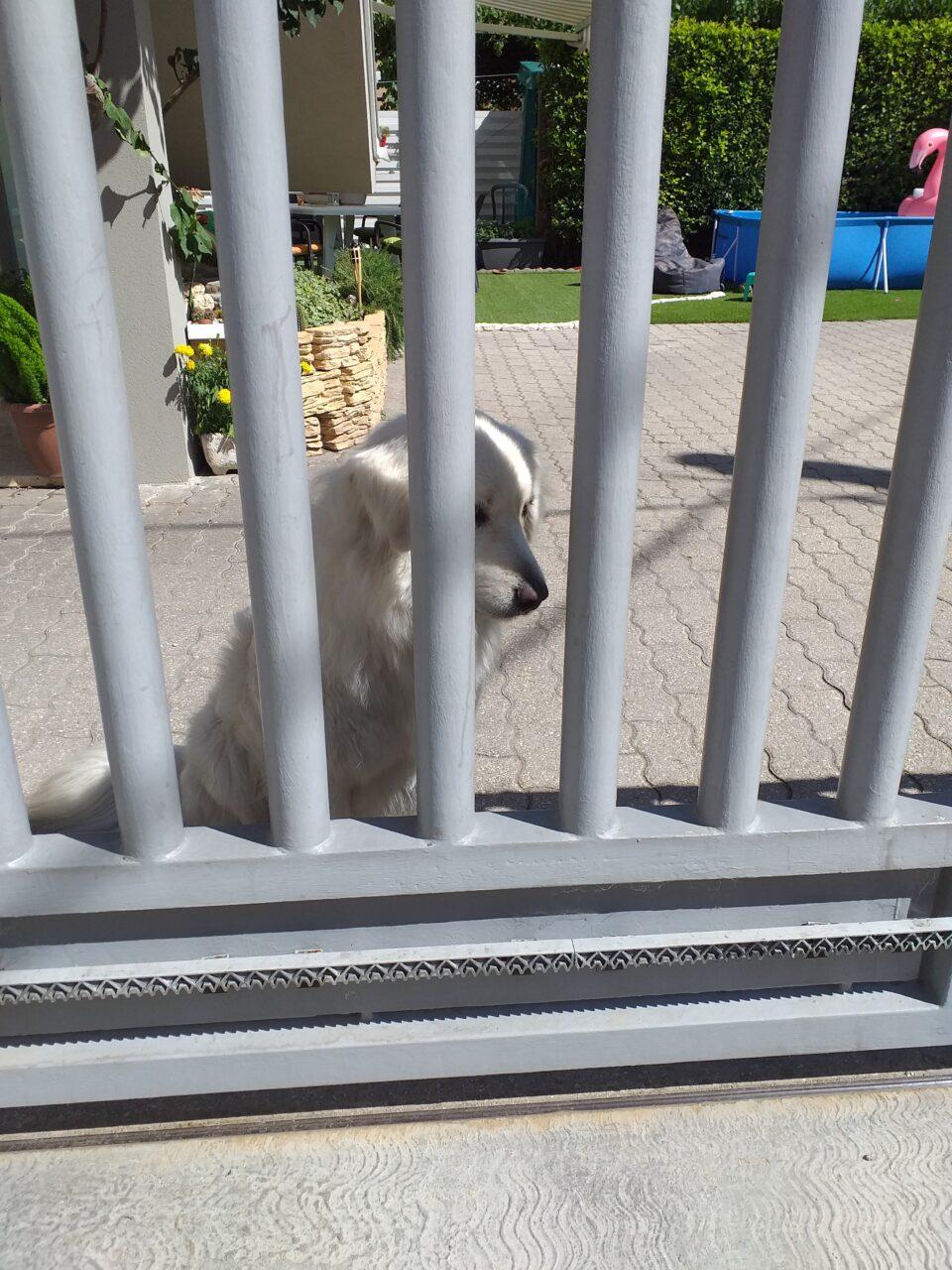 La sofferenza dei cani che vivono in giardino