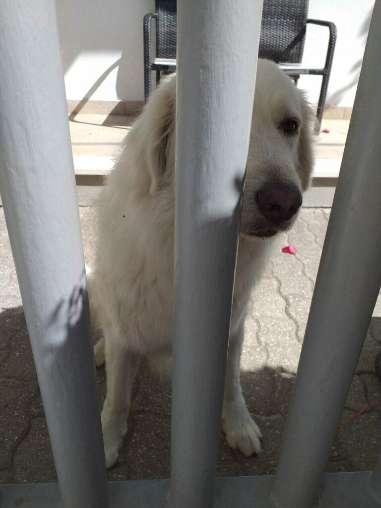 bella articolo 768x1024 - La sofferenza dei cani che vivono in giardino - editoriali-